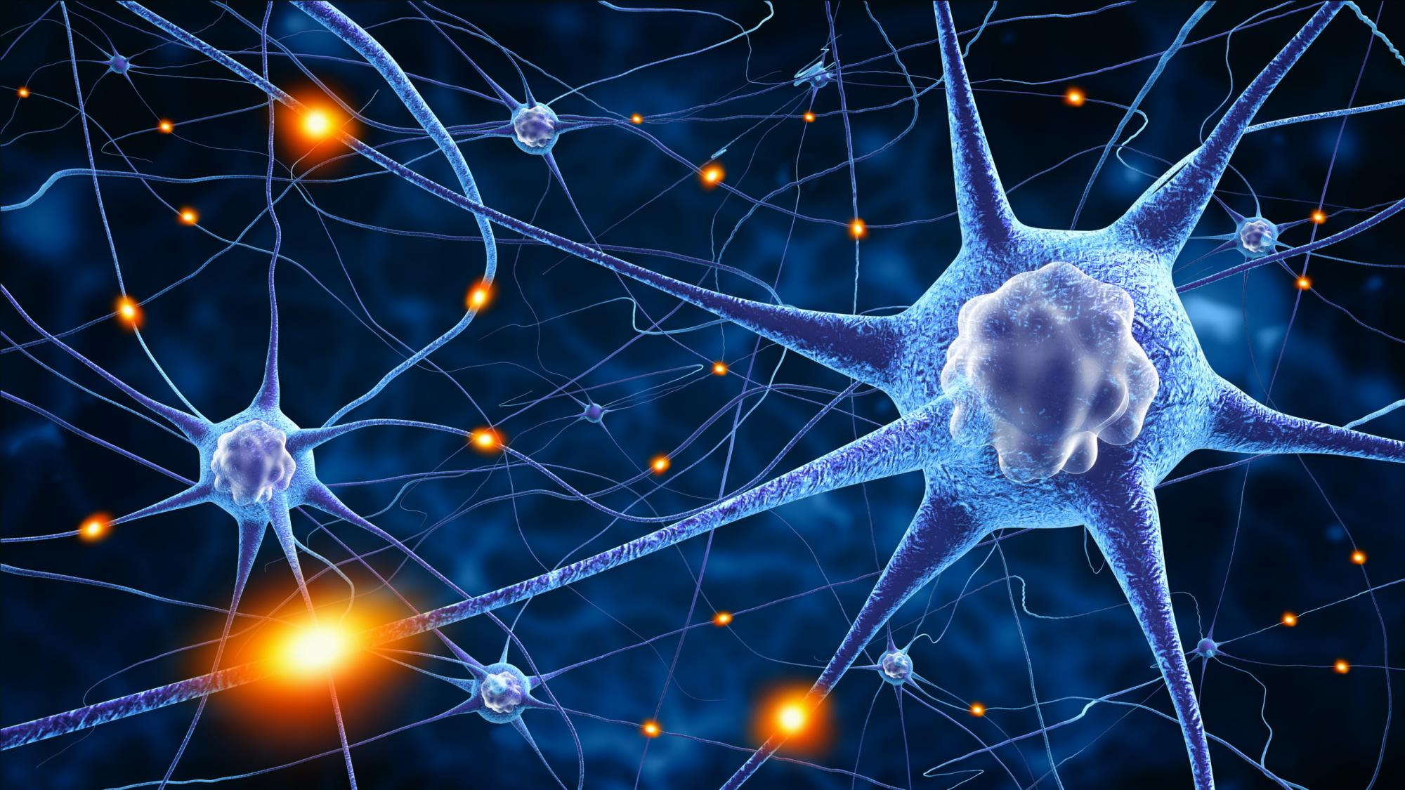 Nerve impulse to and from the brain travel as fast as 170 miles per hr : Article  Posted By blogviral